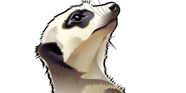 artwork thumbnail: Meerkat